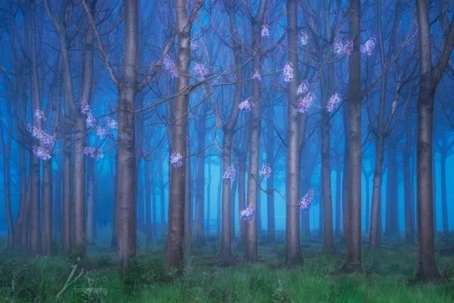 表现树林的立体感,层次感和质感都离不开光线的作用,还可以渲染艺术