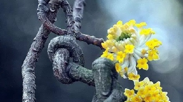 简单 4 招,拍出超赞的竖幅构图花卉