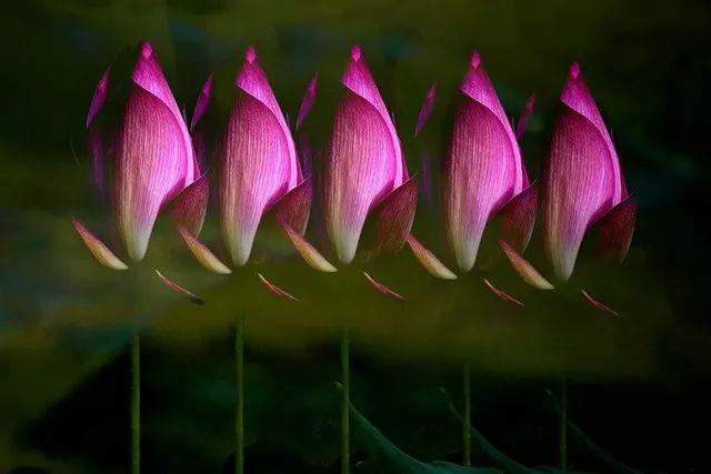 如何拍出超凡脱俗的花卉大片?你需要掌握这个技法