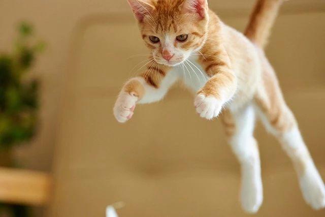 """""""猫奴""""必备!拍好猫咪的 5 大关键性技巧"""