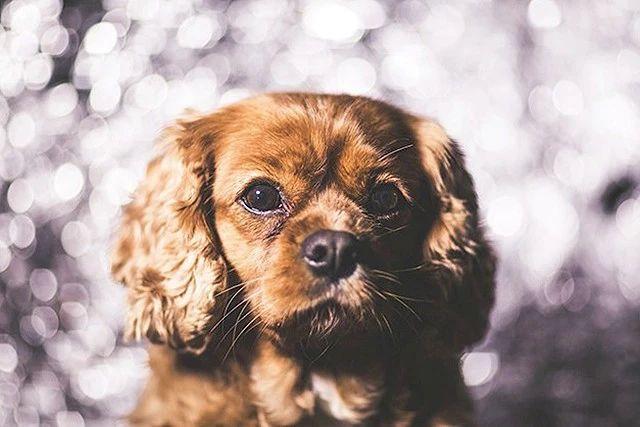 想给你的狗狗拍张高质量写真吗?记住这 8 个小秘诀!