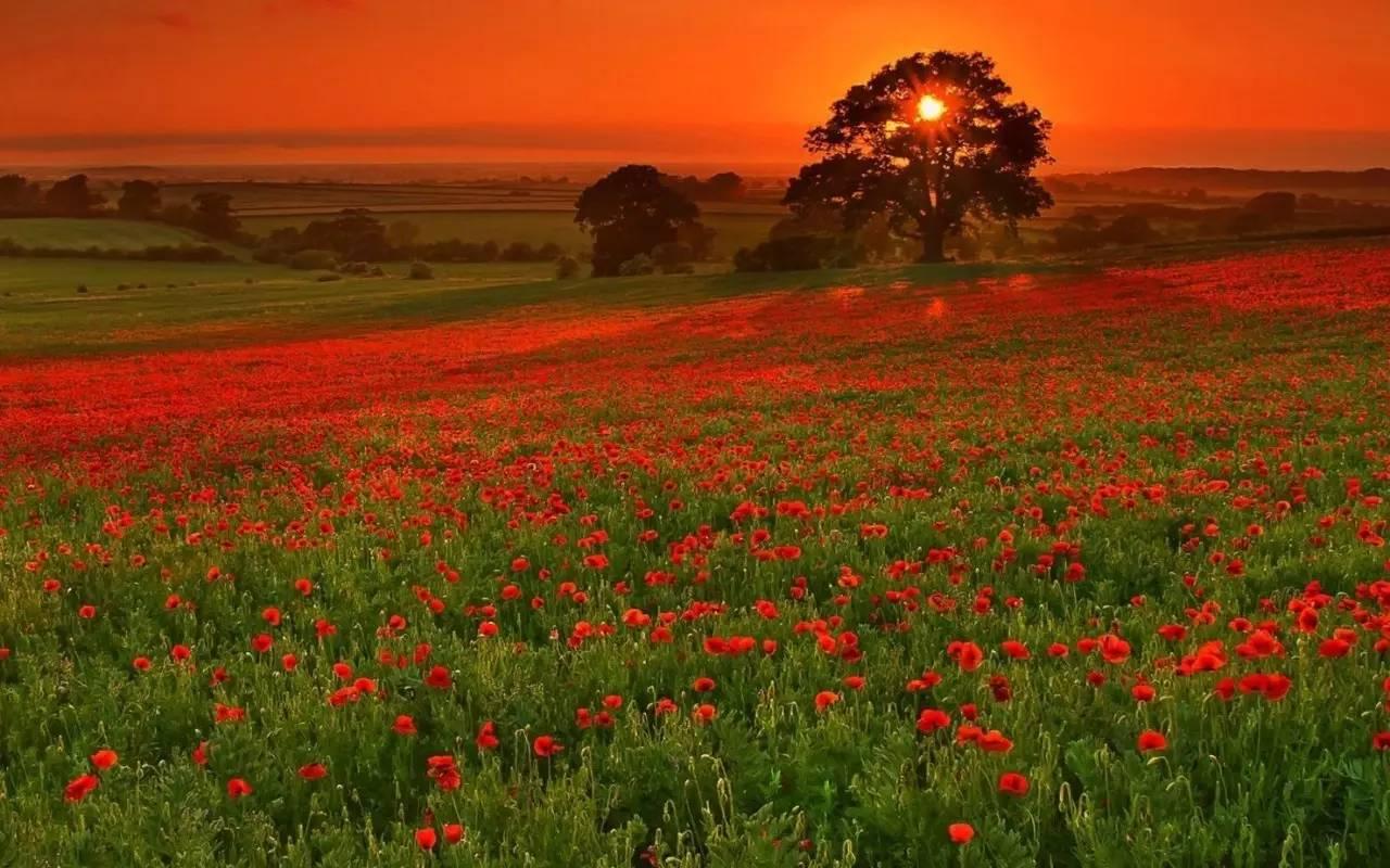拍日落美景的 6 大构图套路,你最喜欢哪一个?