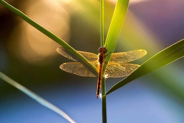 夏季昆虫怎么拍?你需要这 6 个技巧