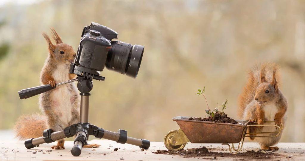 """如何快速提升你的摄影水平?试试这几个 """"修炼"""" 方法"""