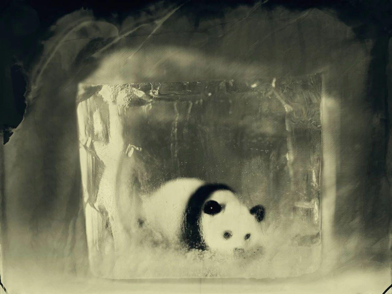 他拍下的动物你一定没见过,照片背后是满满的心酸