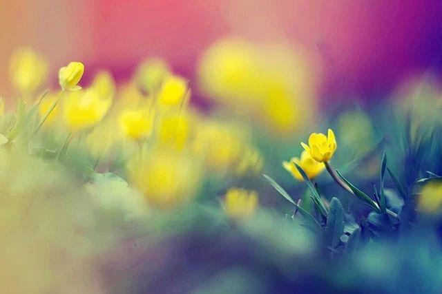 打破常规!这 6 种花卉摄影创意技法值得一试