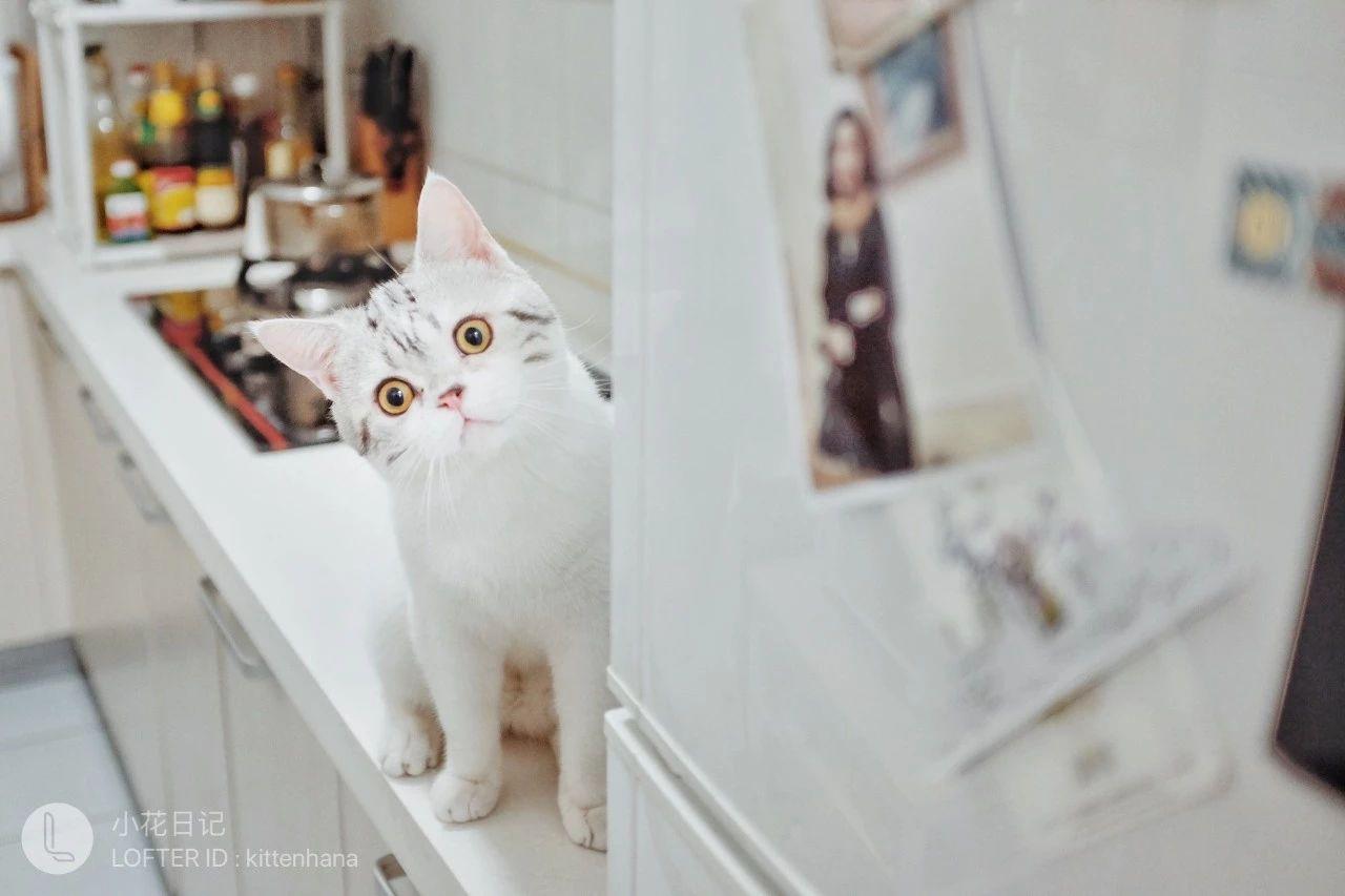 养猫千日,秀猫一时,如何拍好家中猫大人了解一下