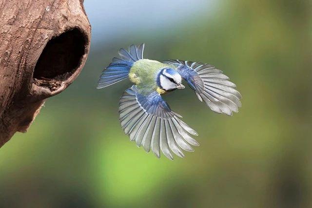 如何拍出清晰的飞鸟照片?注意这 4 点