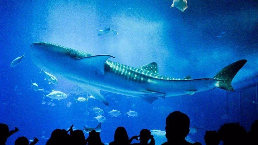 如何在水族馆中拍出好片?你需要这些技巧