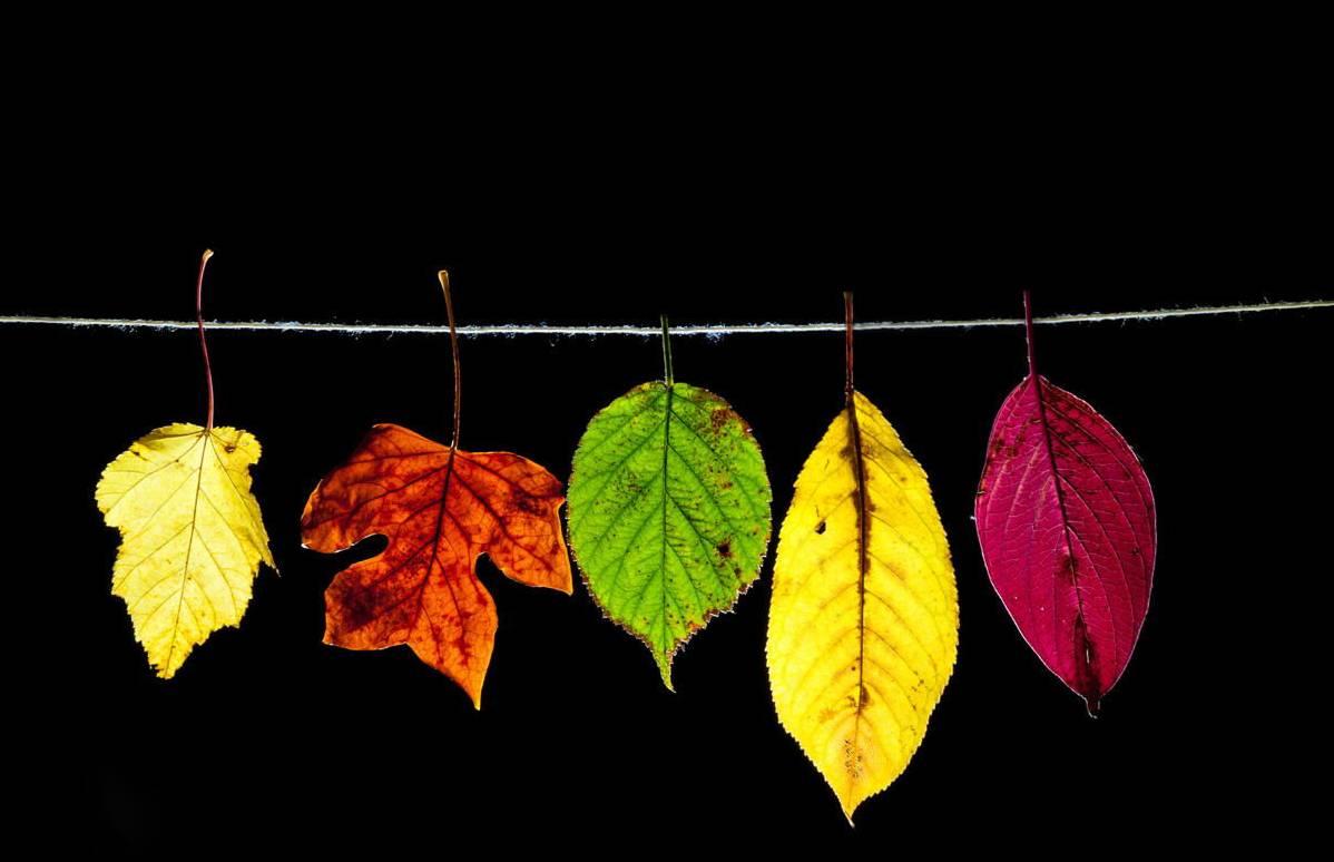 如何拍好秋季美景?你需要这 8 个技巧