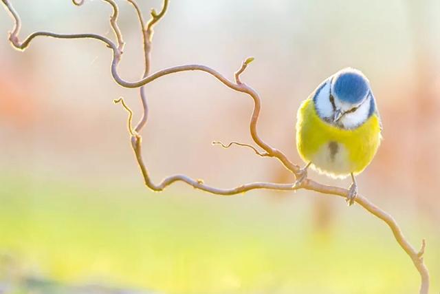 16 岁提名国际野生动物摄影奖,他的照片唯美得刚好