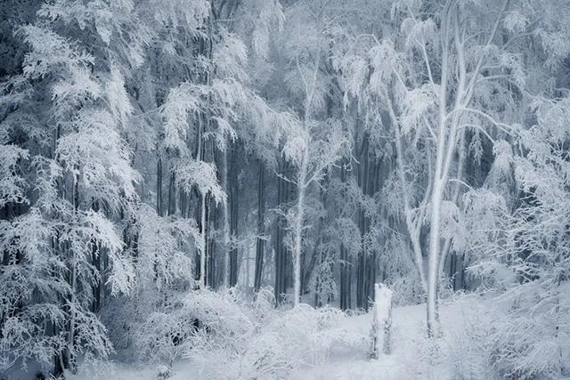 """森林摄影师的 """"冰雪奇缘"""""""
