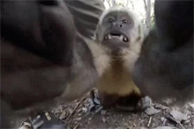 【摄影新鲜事】美国实验室拍摄 32 亿像素西蓝花照片 | 猴子偷走手机后疯狂自拍 | 索尼推出 a7c 小型全画幅无反相机