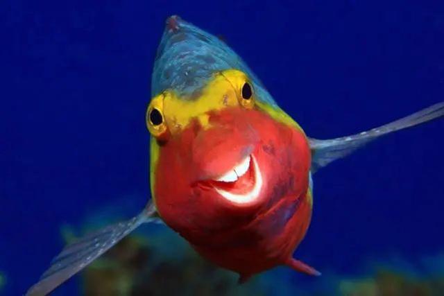 """最搞笑的摄影赛事!今年动物界的 """"表情包"""" 出炉"""