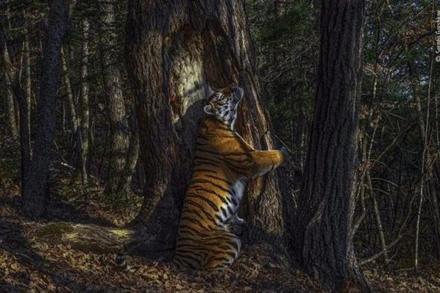 【摄影新鲜事】2020 年度野生动物摄影师结果揭晓 | 佳能推出第二代 EOS M50 及专业闪光灯和电子望远镜