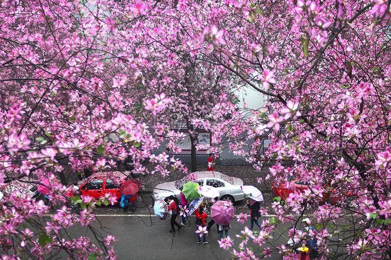 招募 | 柳州实景课堂:胡国庆带你拍花、拍人、拍车,听讲座……快来!